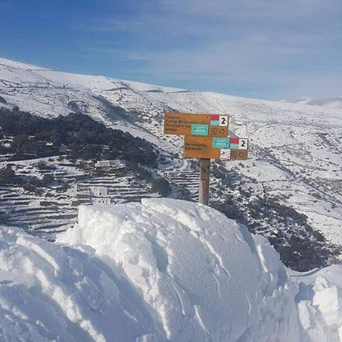 [Afbeelding: snowy.jpg]